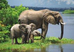 Familie von Elefanten
